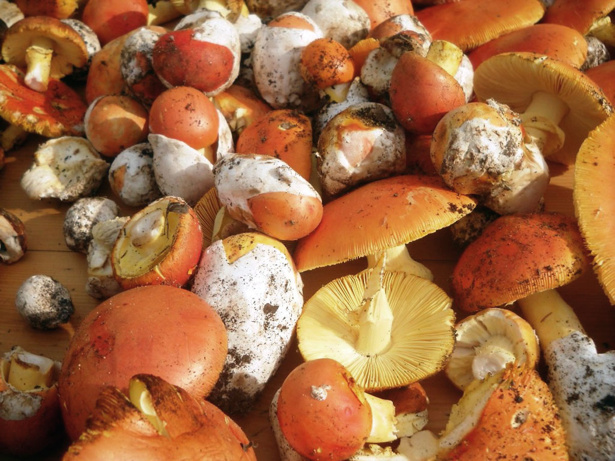 Funghi in insalata (2)