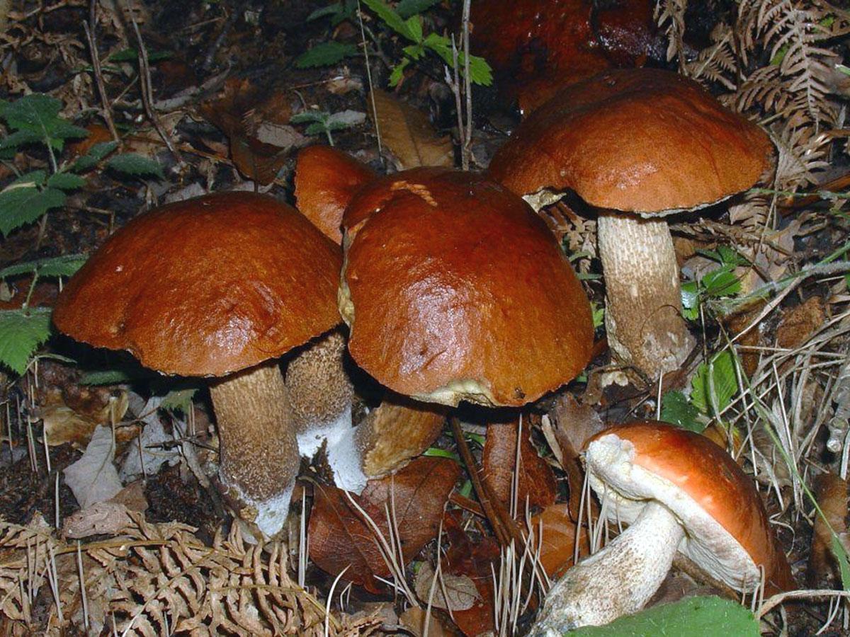 Risotto ai funghi e frutti di mare