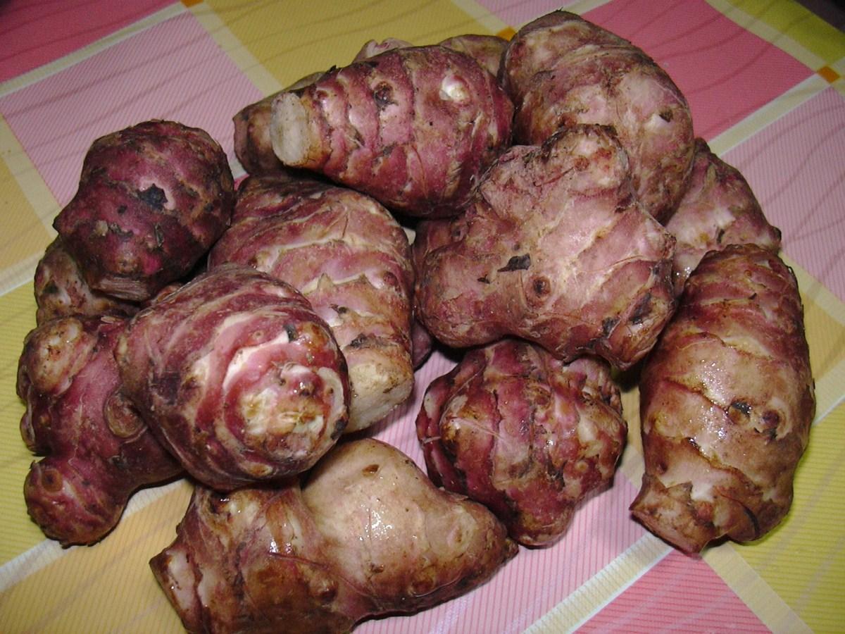 Topinambur in insalata