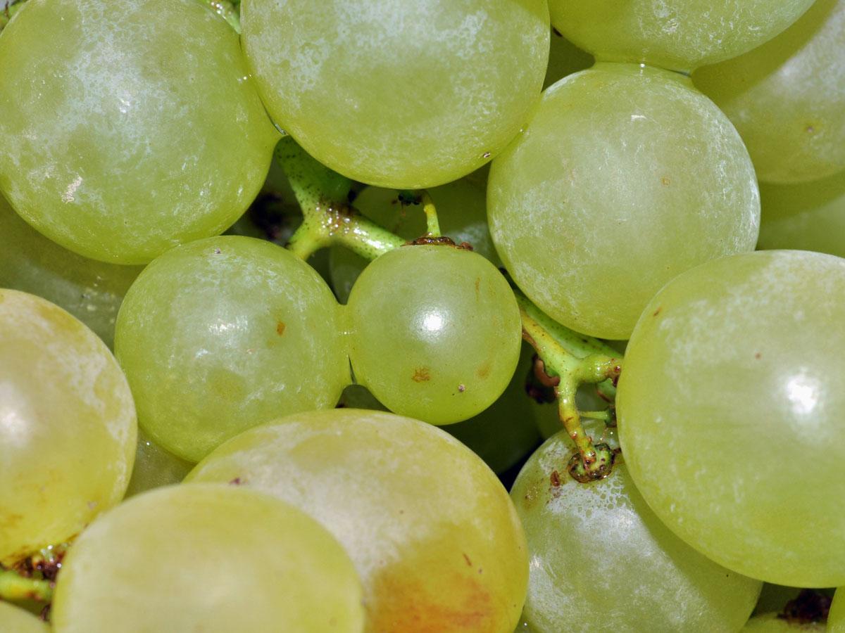Meringata all'uva