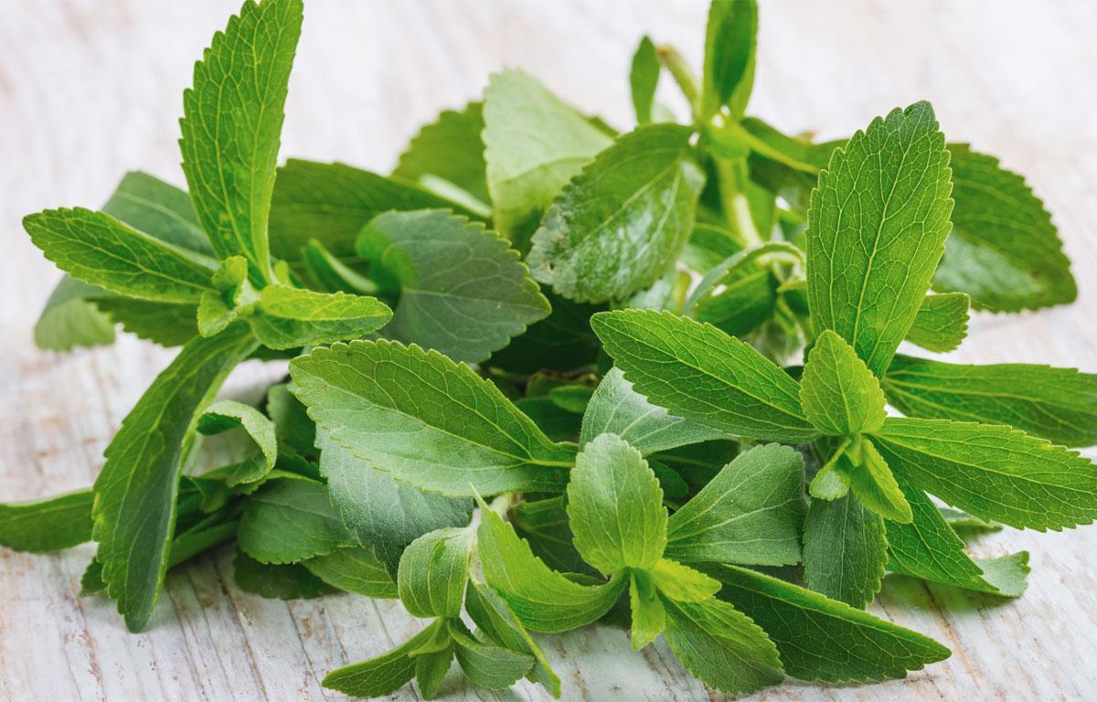 Proprietà della stevia, benefici